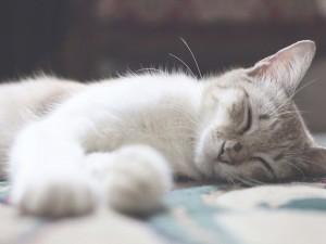 朝までワープ! 真夏のぐっすり快眠法